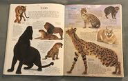 DK Encyclopedia Of Animals (54)