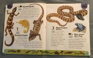 Reptiles and Amphibians Dictionary (3)