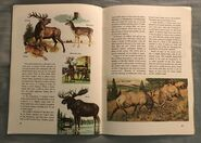 A Golden Exploring Earth Book of Animals (20)