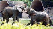 Elephant Evolution