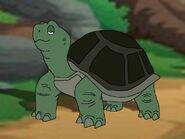 Rileys Adventures Box Turtle