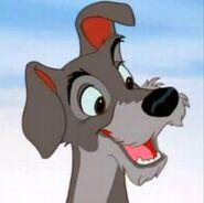 Tramp the Dog (Disney)