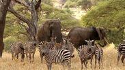 Zebras and Elephants