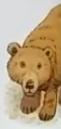 Bear usborne my first thousand words