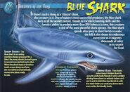 Blue shark weird n