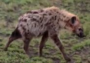 HugoSafari - Hyena02