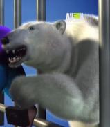 UTAUC Polar Bear 2