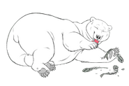1581107069.bearhybrid sushigbbwm copy 9