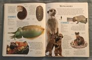 DK Encyclopedia Of Animals (115)