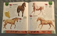 Horse Dictionary (17)