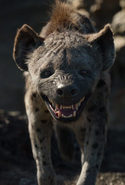 Kamari the Hyena