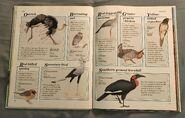 Macmillan Animal Encyclopedia for Children (16)