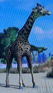 Masai Giraffe ZTX
