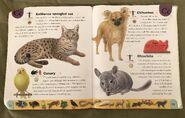 Pet Dictionary (4)