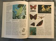 The Kingfisher Illustrated Encyclopedia of Animals (26)
