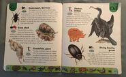 Deadly Creatures Dictionary (5)