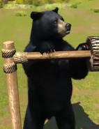 Olympic-black-bear-zootycoon3