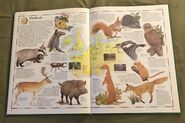 The Animal Atlas (12)