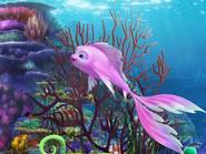 The Reef Cordelia