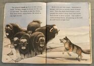 Awesome Animals (Road to Reading) (11)