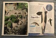 DK Encyclopedia Of Animals (166)