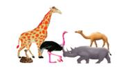 Giraffe, Rhino, Snake, Ostrich, & Camel