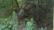 Minnesota Zoo Chasmosaurus