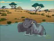Phedra the Elephant