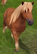 Shetland-pony-wildlife-park-2