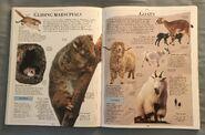 DK Encyclopedia Of Animals (85)