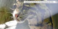 Fort Wayne Children's Zoo Clouded Leopard