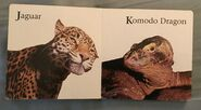 James Balog's Animals A to Z (6)