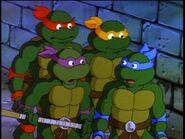2272446-turtles100