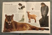 DK Encyclopedia Of Animals (21)
