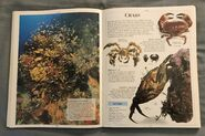 DK Encyclopedia Of Animals (63)
