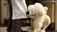 Fluffles wants wallace to go