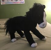 Jonathan the Arabian Horse