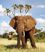 Why Elephants Are Important