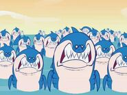 HTF Sharks