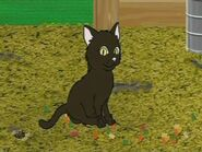 ATHF Cat