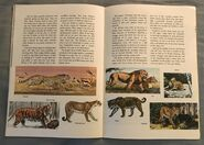A Golden Exploring Earth Book of Animals (14)