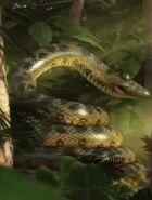 JungleBunch Anaconda
