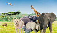 Safari-bike-africa-animales-elephant, rhino, buffalo, lion, leopard