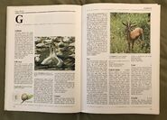 The Kingfisher Illustrated Encyclopedia of Animals (58)
