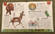Weird Animals Dictionary (17)