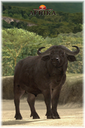 Afrika ps3 african buffalo by scottslive21-da3jqkv