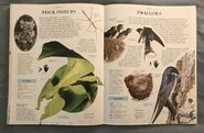 DK Encyclopedia Of Animals (156)