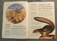 Desert Animals (Over 100 Questions and Answers to Things You Want to Know) (1)