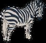 Gravy the Zebra