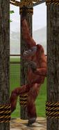 Orangutan-wildlife-park-2